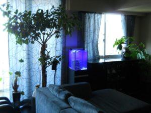 個人宅様 お部屋の雰囲気に合わせた素敵な水槽を