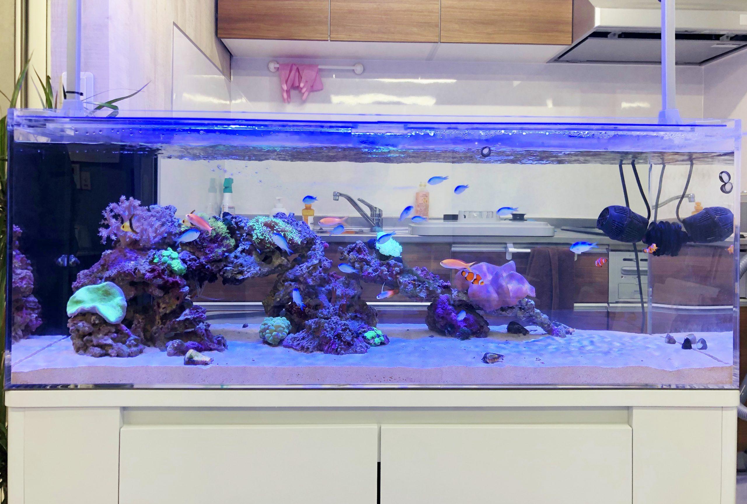 オフィス事務所 120cm海水魚水槽 正面画像