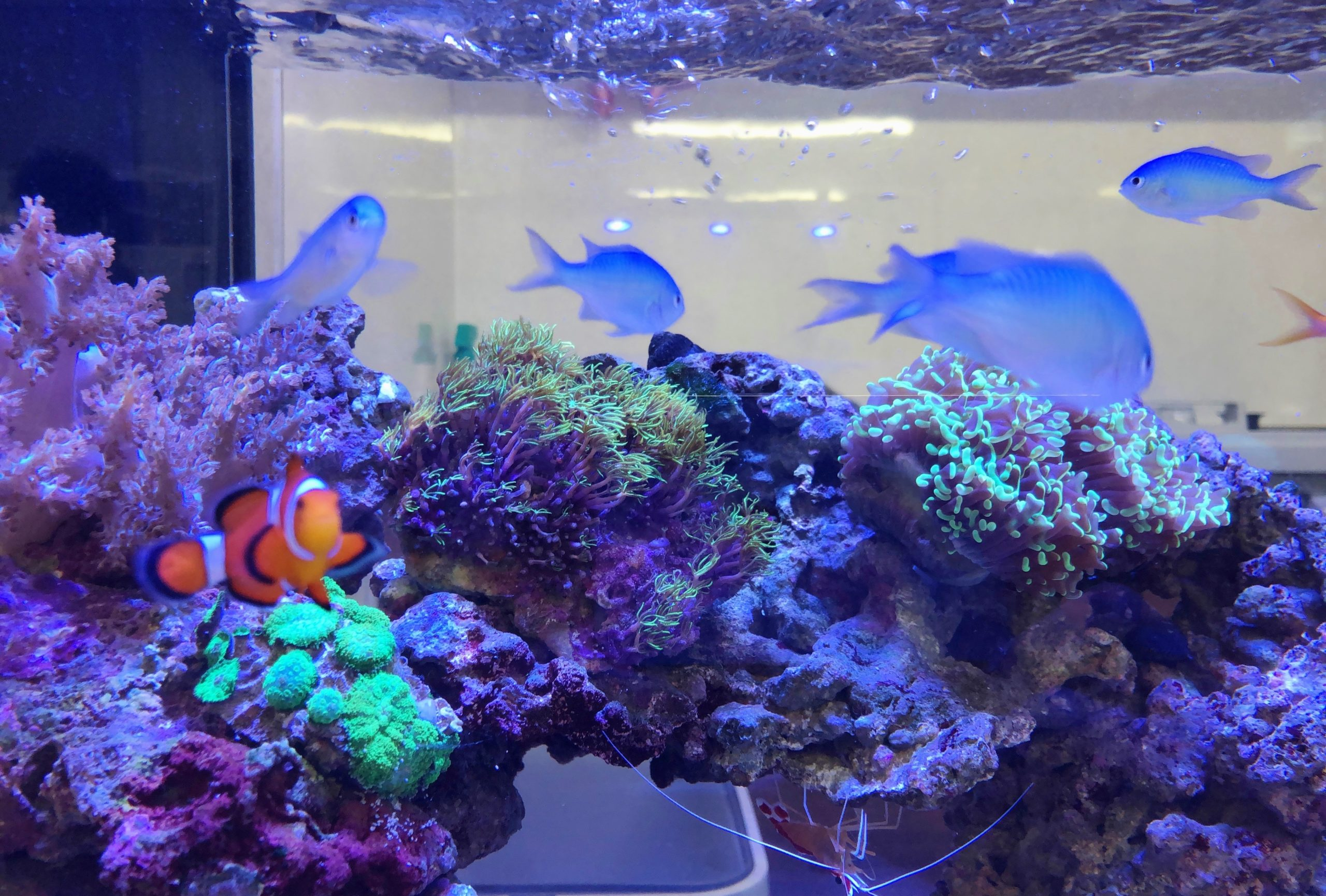 オフィス事務所 120cm海水魚水槽 アップ画像